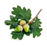 Mo Shi Zi (Oak Gallnuts)