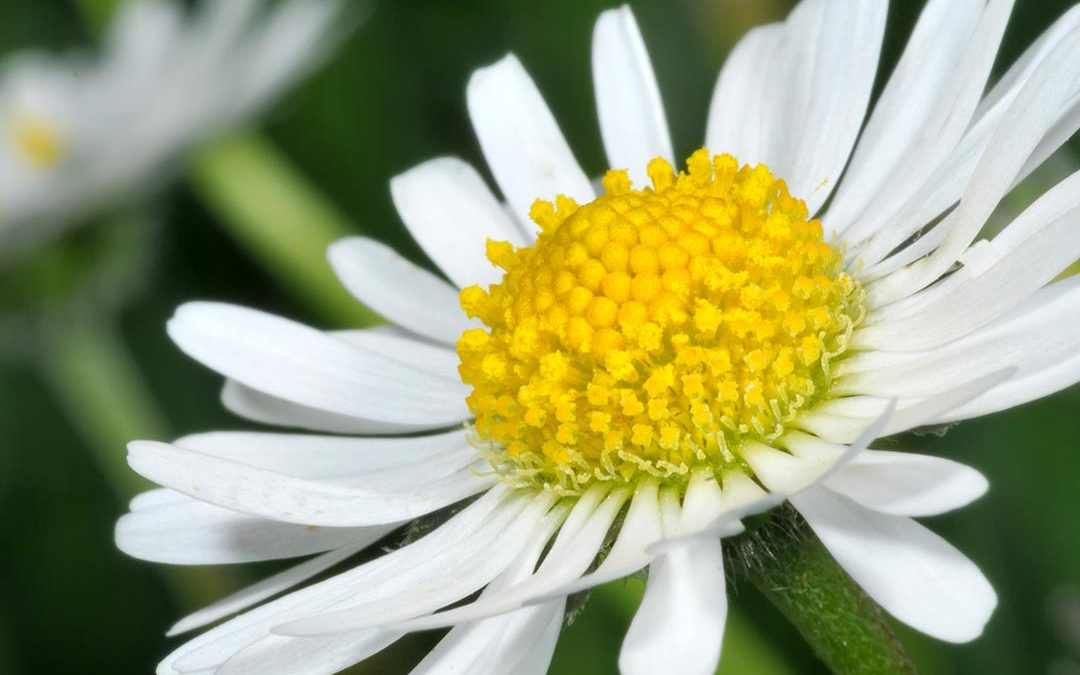 Summer Means Daisies!