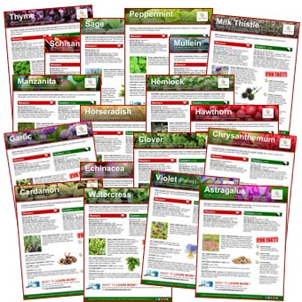 Herb Fact Sheets