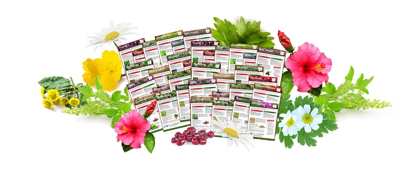 Healing Herb Fact Sheet Volumes