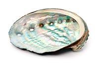 Abalone Shell (Shi Jue Ming)