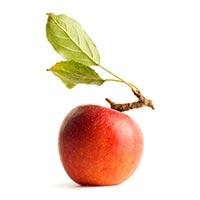 Apple (Ping Guo)