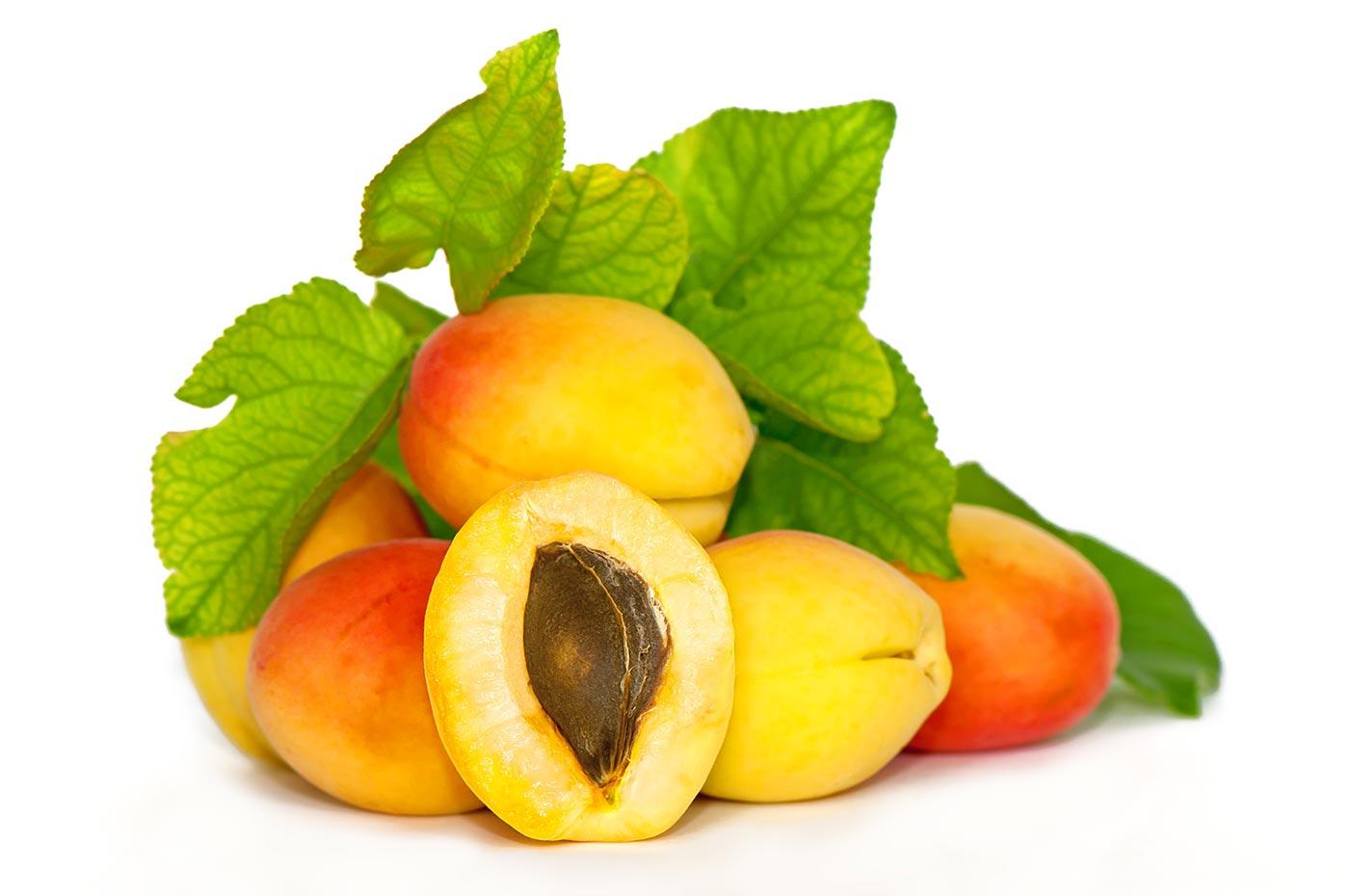 Apricot / Apricot Kernel (Xing, Xing Ren)