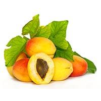 Apricot/Apricot Kernel (Xing, Xing Ren)