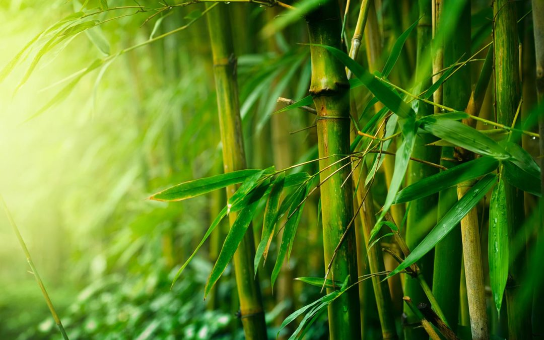 Bamboo: Five Unique Herbs