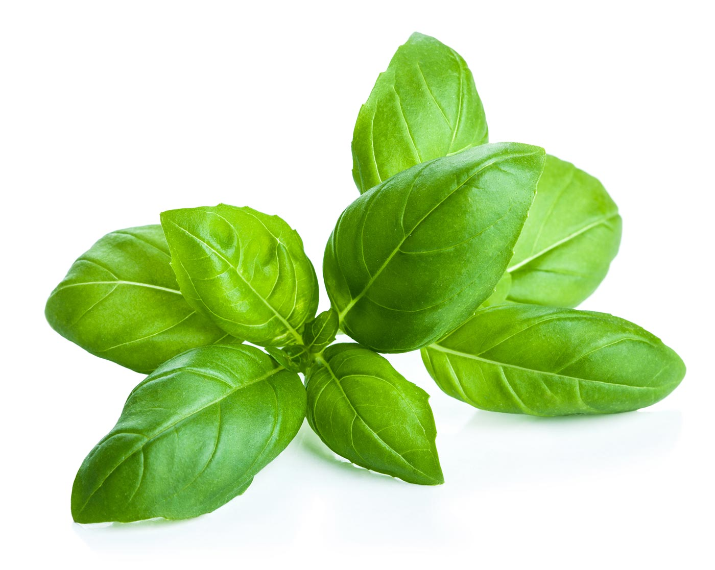 Basil (Luo Le)