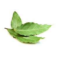 Bay Leaf (Yue Gui Shu Ye)