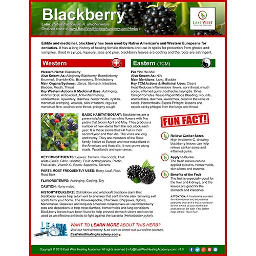 herb_blackberry-icon-p01