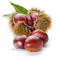 Chestnut (Li Zi)