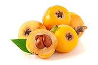 Chinese Plum Tree / Loquat (Pi Pa / Pi Pa Ye)
