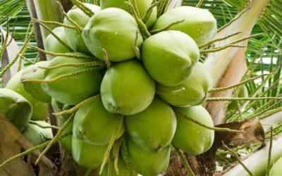 Is coconut heart healthy?