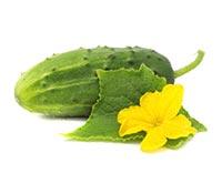 Cucumber (Huang Gua)