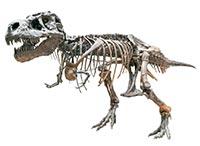 Dragon Bone (Long Ru)