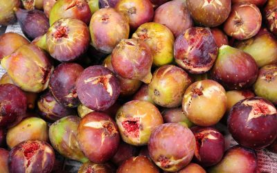 The Healing Powers of Fig