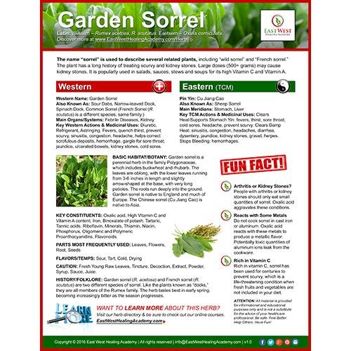 Garden Sorrel (Cu Jiang Cao) Poster
