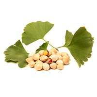 Bai Gou (Ginkgo Nuts/Seeds)