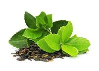 Green Tea (Lu Cha)