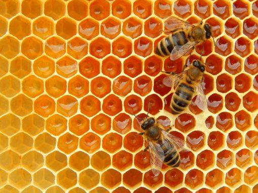 Honey / Royal Jelly (Feng Wang)
