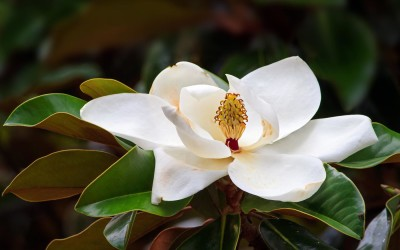 Use This Flower To Calm Your Nerves