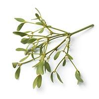 Mistletoe (Hu Ji Sheng)