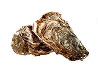 Oyster Shell (Mu Li)