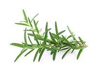 Rosemary (Mi Die Xiang)