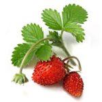 Strawberry (Cao Mei)